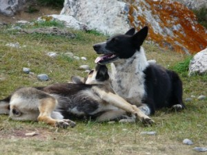 dog1-