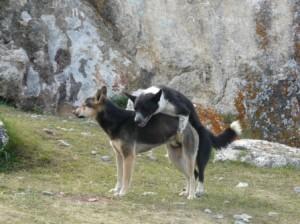 dog2-